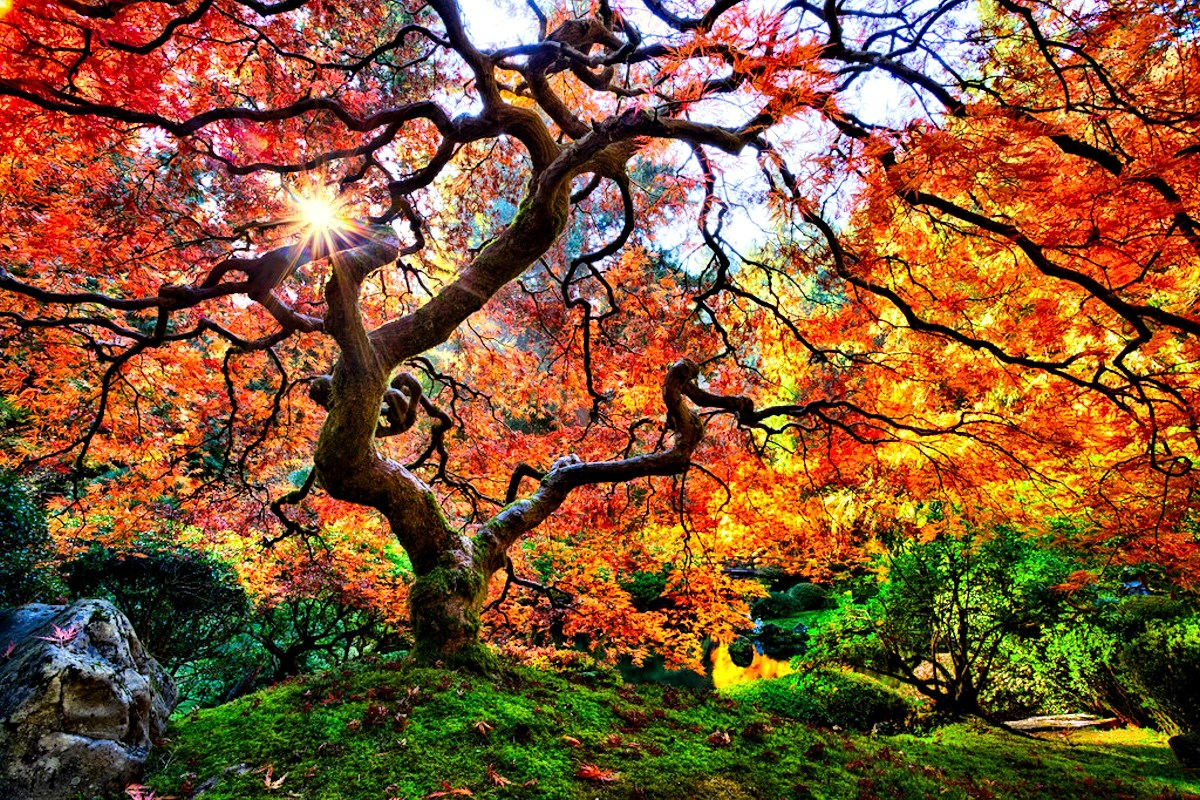 00 Michael Matti. A Tree in the Famous Portland Japanese Garden. 2013